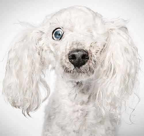 fashion-photographer-helps-abandoned-dogs-find-forever-homes-581c443fea4c4__700