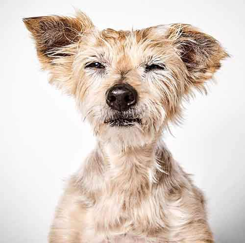 fashion-photographer-helps-abandoned-dogs-find-forever-homes-581c44681af1b__700