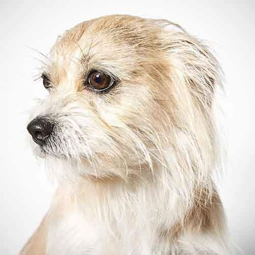 fashion-photographer-helps-abandoned-dogs-find-forever-homes-581c44a9dfc7b__700