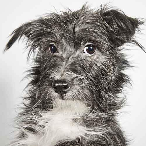 fashion-photographer-helps-abandoned-dogs-find-forever-homes-581c464166a09__700