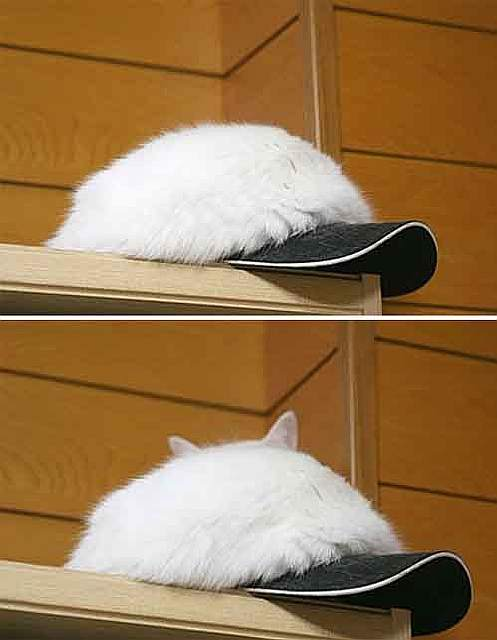 find-hidden-cat-camouflage-hide-and-seek-catouflage-113-58369bef92ab0__605
