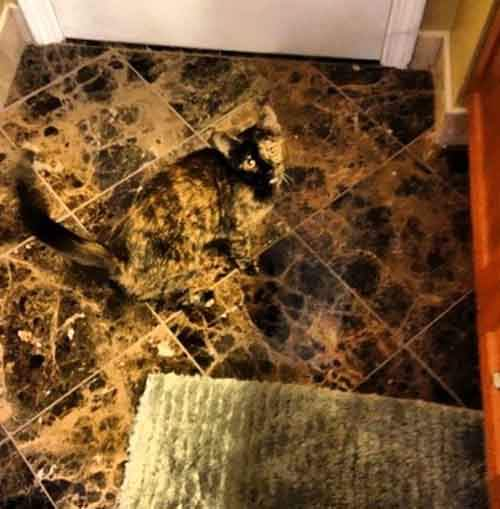 find-hidden-cat-camouflage-hide-and-seek-catouflage-118-5836a106009a1__605