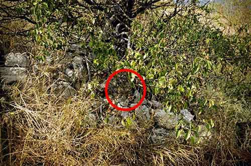 find-hidden-cat-camouflage-hide-and-seek-catouflage-197