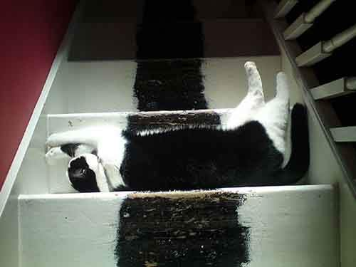 find-hidden-cat-camouflage-hide-and-seek-catouflage-34-583568387e4d1__605