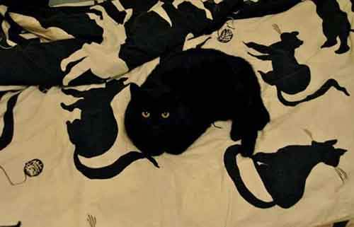 find-hidden-cat-camouflage-hide-and-seek-catouflage-41-58356e932a83c__605