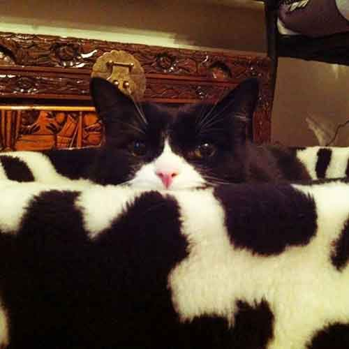 find-hidden-cat-camouflage-hide-and-seek-catouflage-57-5835881c505e7__605