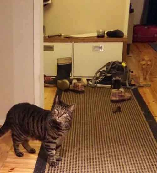 find-hidden-cat-camouflage-hide-and-seek-catouflage-77-583594652aec9__605