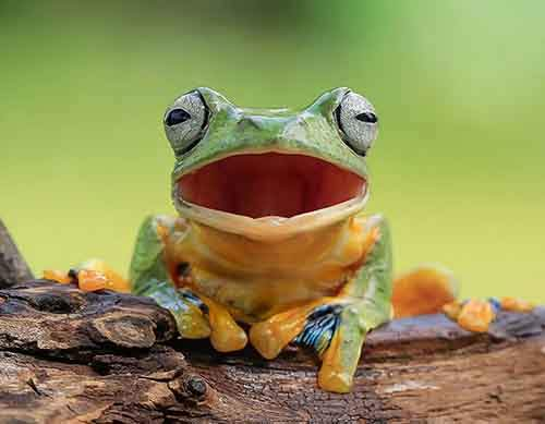 frog-photography-tantoyensen-1-5836fb5d51096__880