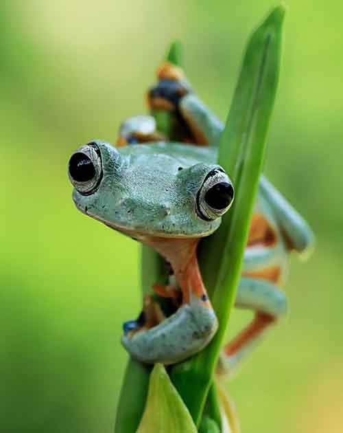 frog-photography-tantoyensen-25-5836fb9a2b054__880