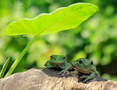 frog-photography-tantoyensen-32-5836fbae25d94__880