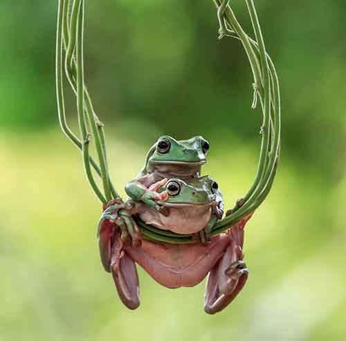 frog-photography-tantoyensen-6-5836fb6800e52__880