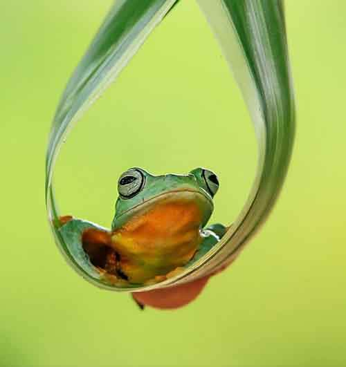 frog-photography-tantoyensen-8-5836fb6e16d78__880