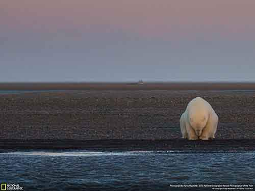 2016-national-geographic-nature-photographer-of-the-year-winners-19-584fb7aaaa058__880