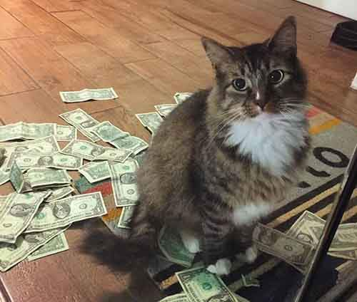 money-grabbing-cat-cashnip-kitty-22-59bf