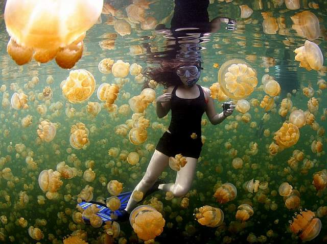 17596460-R3L8T8D-1000-underwater-girl-jellyfish_89910_990x742