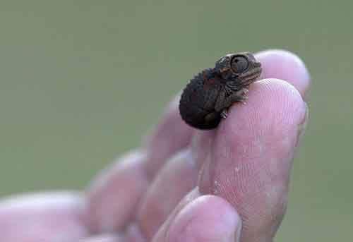 cute-reptiles-1011__605