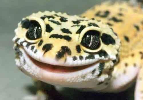 cute-reptiles-104__605