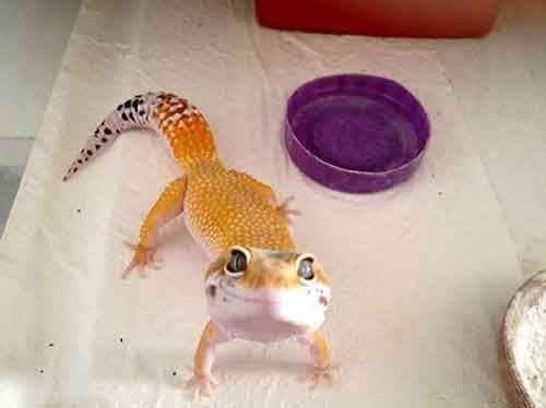cute-reptiles-109__605