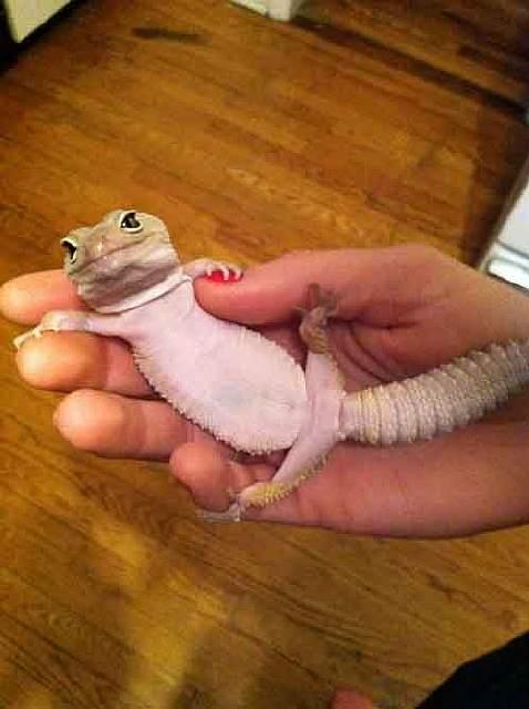 cute-reptiles-131__605