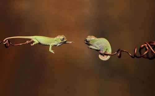 cute-reptiles-16__605