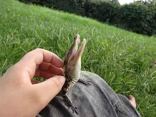 cute-reptiles-201__605