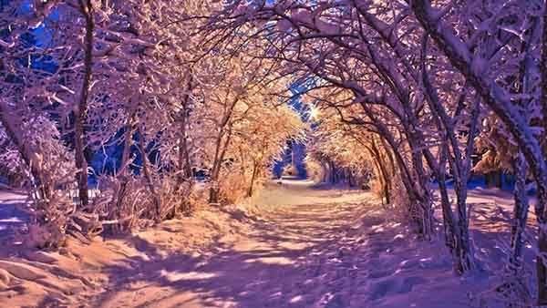 nature_landscapes_winter_snow_christmas_sidewalk_roads_lights_white_trees_desktop_images