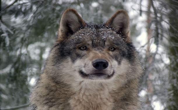 Wolfssegen-610x380