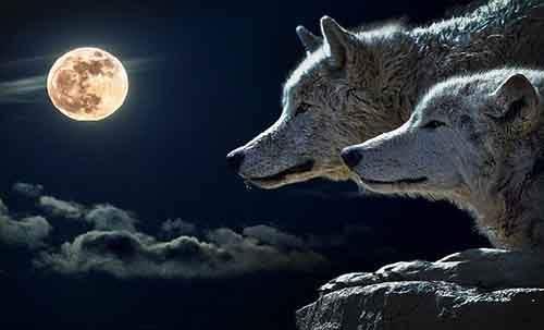 hour-wolf-610x370