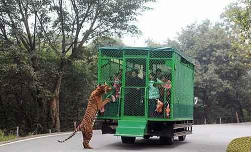 lehe-ledu-wildlife-zoo-wcht04-640x389