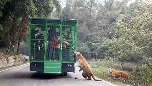 lehe-ledu-wildlife-zoo-wcht05-640x362