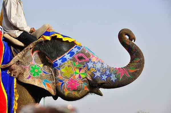 unique-festivals-around-the-world-jaipur-elephant-festival__880