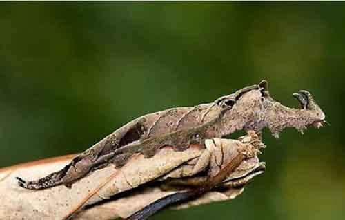 camouflaged_animals_14