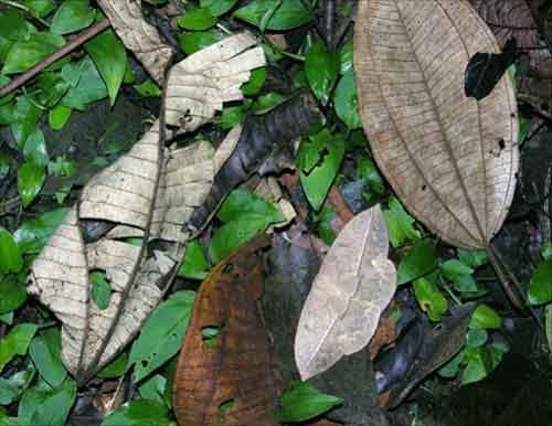 camouflaged_animals_25
