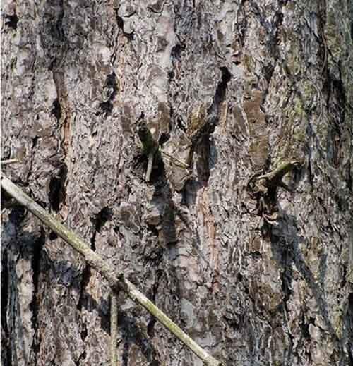 camouflaged_animals_26