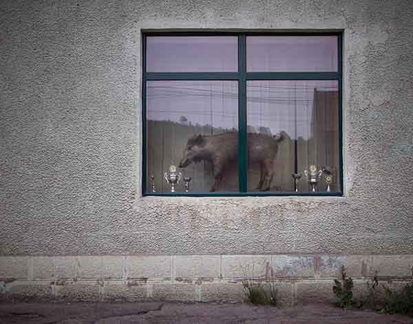 romania-villages-funny-photography-hajdu-tamas-31