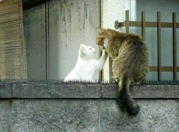 true-love-knows-no-barriers-artnaz-com-4
