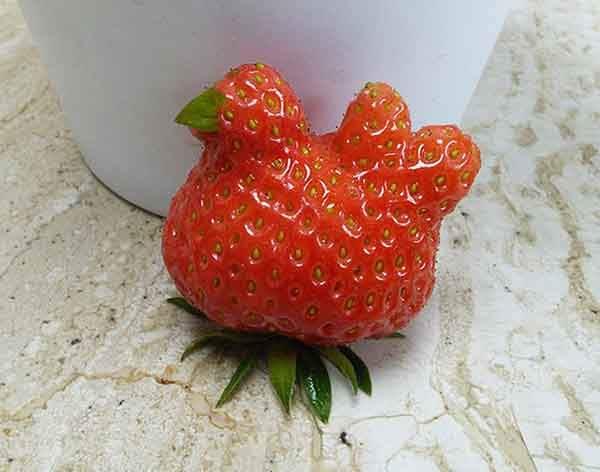 unusual-shape-fruit-vegetables-34__605