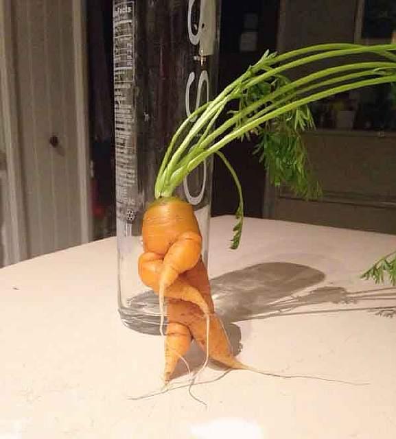 unusual-shape-fruit-vegetables-3__605