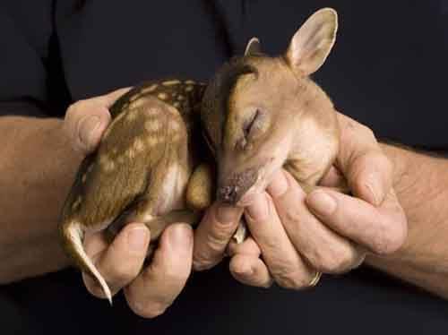 cutest-baby-animals-15__605