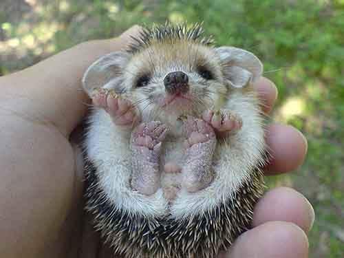 cutest-baby-animals-17__605