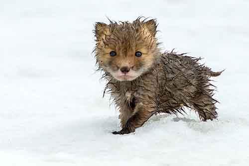 cutest-baby-animals-27__605