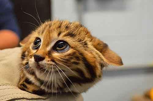 cutest-baby-animals-30__605
