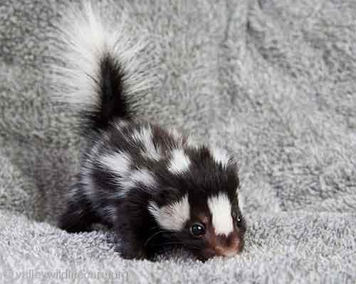 cutest-baby-animals-3__605