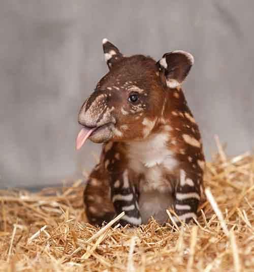 cutest-baby-animals-49__605