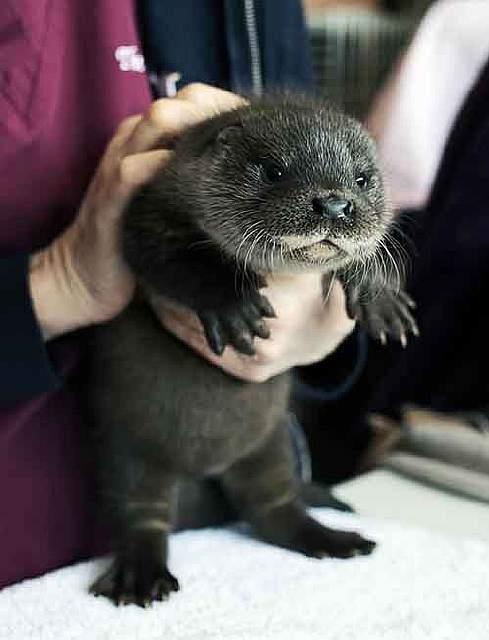 cutest-baby-animals-57__605