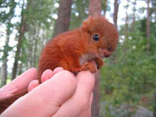 cutest-baby-animals-59__605 (1)