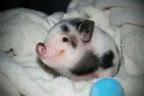 cutest-baby-animals-7__605