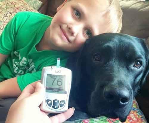 jedi-diabetic-alert-dog