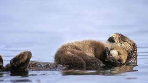 Картинки по запросу Семейные ценности в мире животных. Фото.