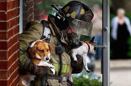 firefighter-572a03f63154e__605